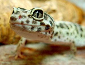 ontstaan van het leven museum iguana