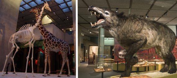 dinosauriërs museum